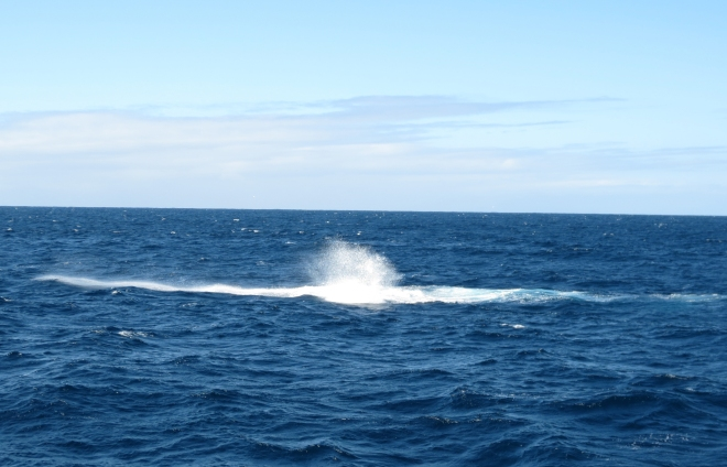 The Humpback Whale Fingerprint and Blow